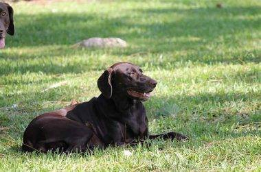 Kaycee enjoying the sunshine