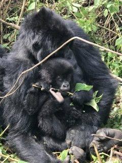 gorilla trek 3